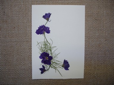 Babyzen's flowers